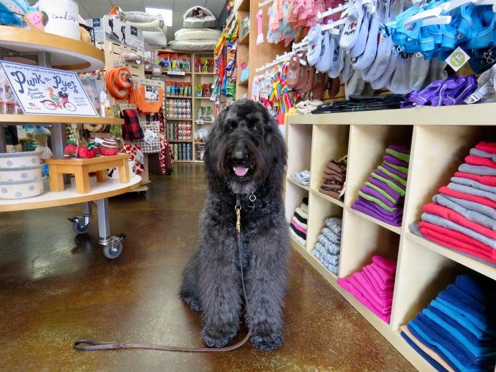 Eco-Tips for Pet Store Retailers