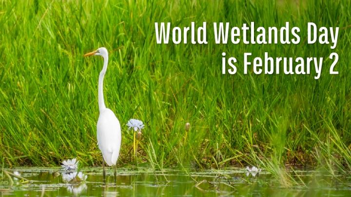 Mimicking Marshes: Exploring Wetlands' RestorativeNature